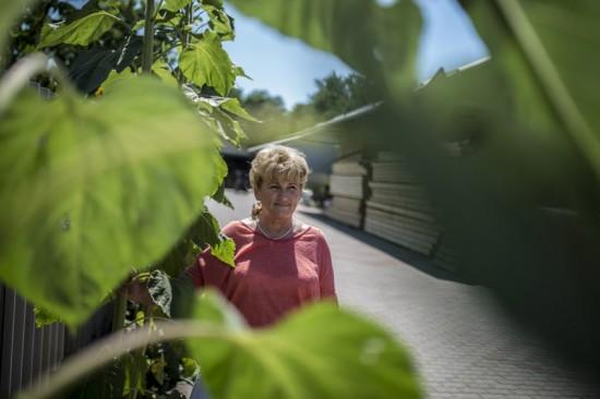 Katalin és napraforgók az üzem udvarán